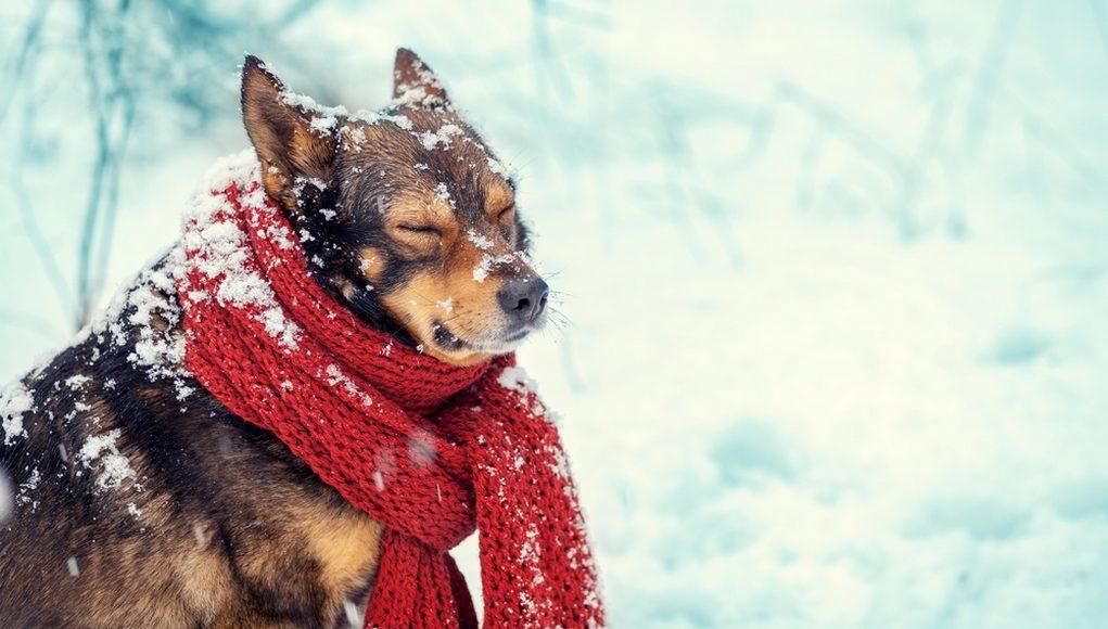 d91740222a3bd Ubranie dla psa, wybór ubranka; kiedy ubierać psa